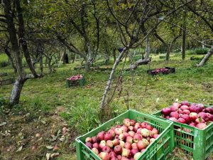 Herbst Apfel